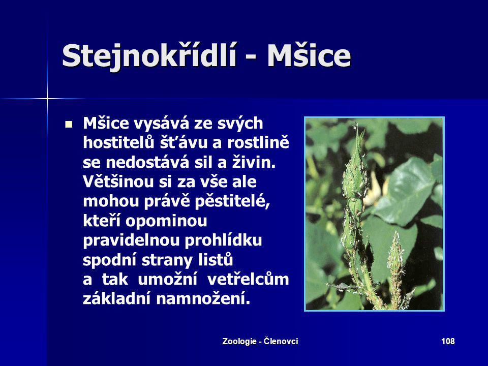 Zoologie - Členovci107 Stejnokřídlí Křísové Křísové Mery Mery Mšice Mšice Molice Molice Cikády Cikády