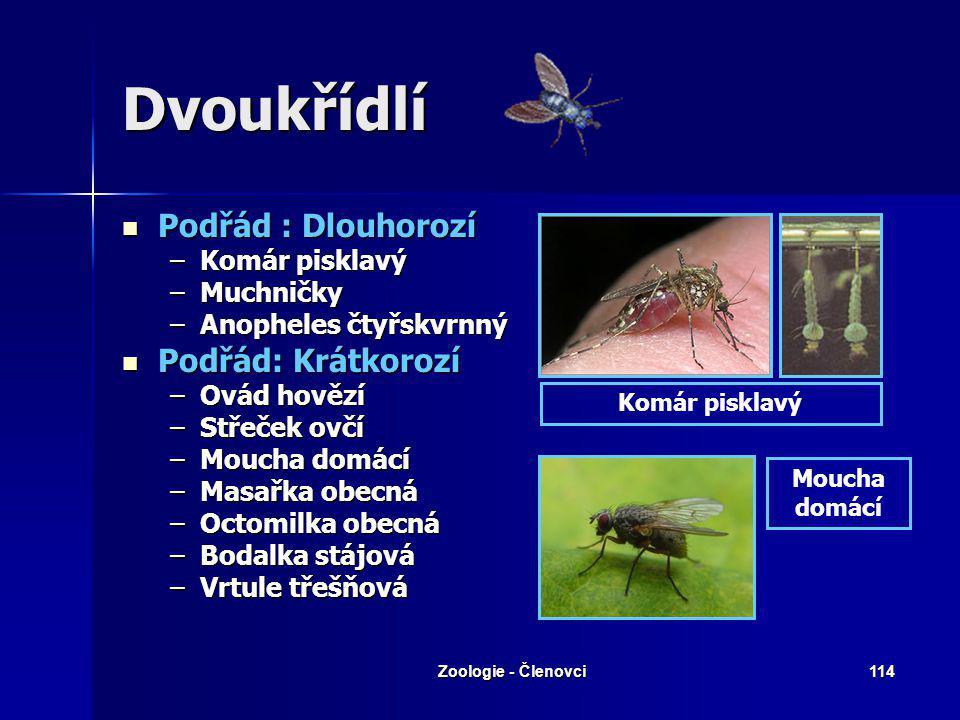 Zoologie - Členovci113 Síťokřídlí – Zlatoočka skvrnitá