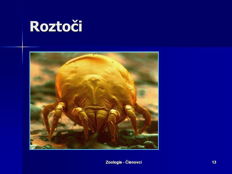 Zoologie - Členovci12 Řád: Roztoči Všechny části těla srostlé v jeden celek. Všechny části těla srostlé v jeden celek. Vývoj nepřímý (larva, nymfy, im