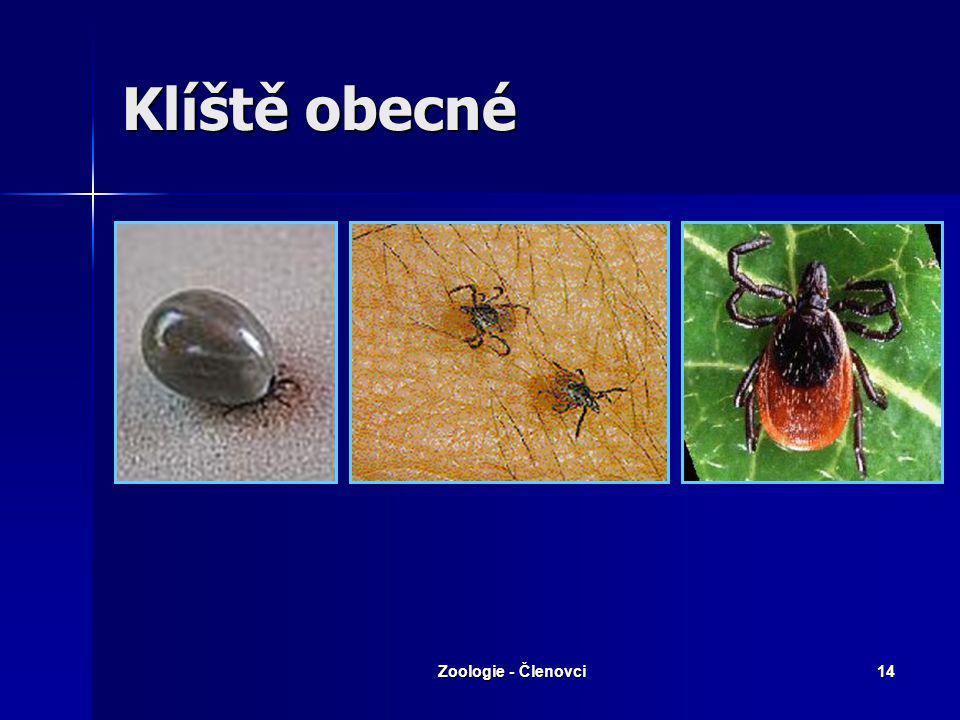 Zoologie - Členovci13 Roztoči