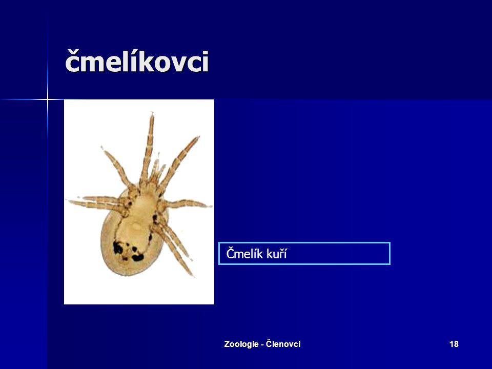 Zoologie - Členovci17 Projevy boreliozy - erytém