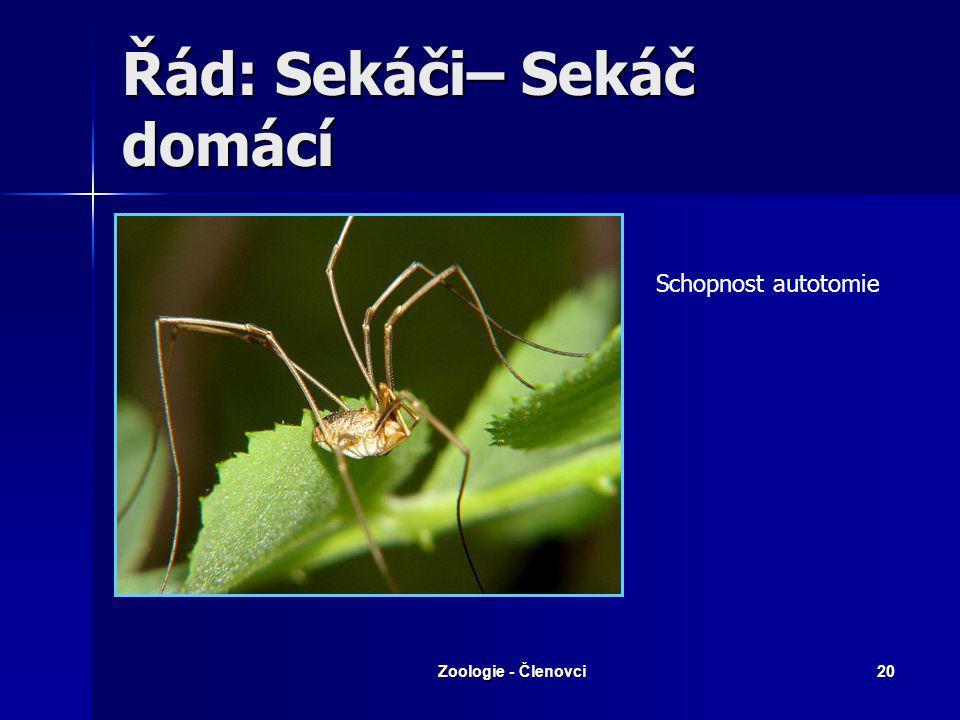 Zoologie - Členovci19 zákožkovci Zákožka svrabová Zákožka svrabová