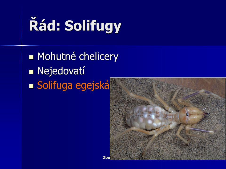 Zoologie - Členovci20 Řád: Sekáči– Sekáč domácí Schopnost autotomie