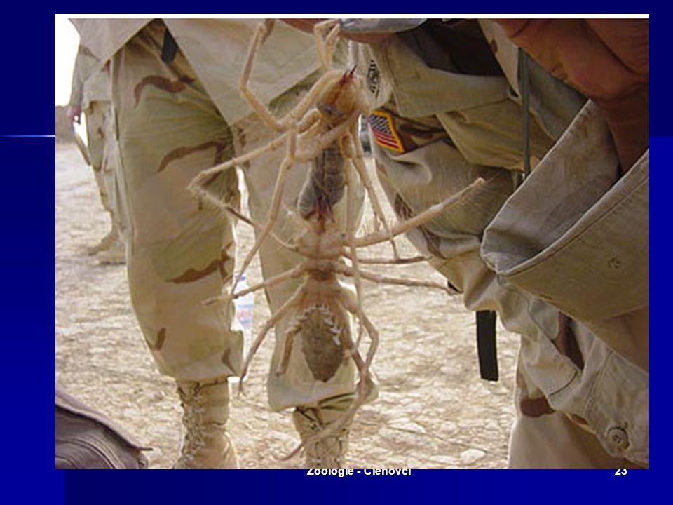 Zoologie - Členovci22 Smrtící zabijáci?! Běhají rychlostí 16km/h, doskočí 92cm. Jsou to noční pavouci, takže vycházejí ven jen v noci nebo pokud jsou