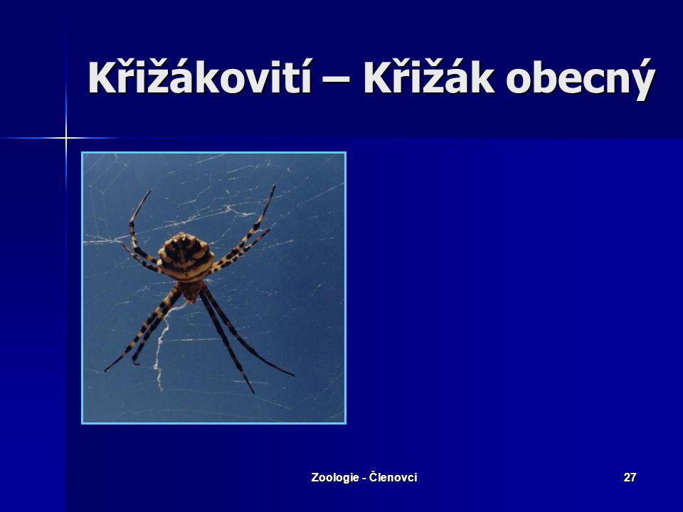 Zoologie - Členovci26 Snování pavučin Na nohou hřebínky s drápky Na nohou hřebínky s drápky Snovací bradavky (na nich ústí snovacích žláz) Snovací bra