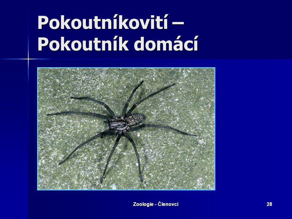 Zoologie - Členovci27 Křižákovití – Křižák obecný