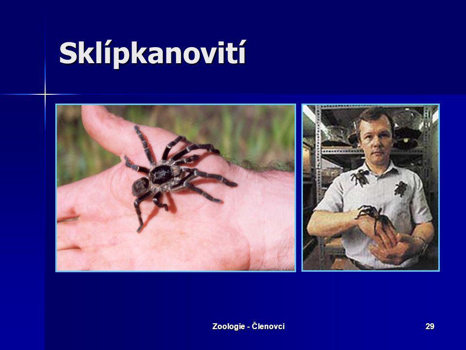 Zoologie - Členovci28 Pokoutníkovití – Pokoutník domácí