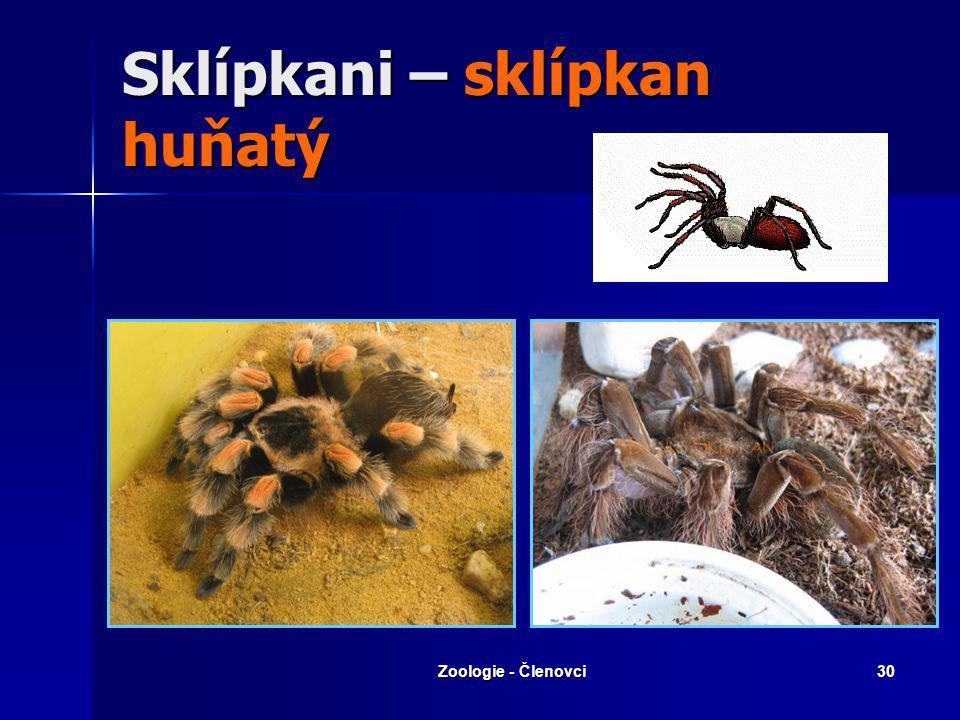 Zoologie - Členovci29 Sklípkanovití