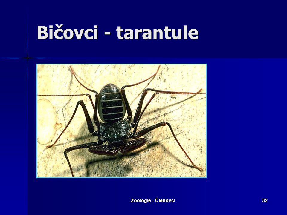 Zoologie - Členovci31 Tarantulas X tarantule Název tarantule pro sklípkany je špatný. Mnohé zřejmě mate anglický název pro sklípkany - tarantulas, kte