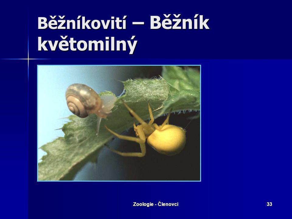 Zoologie - Členovci32 Bičovci - tarantule