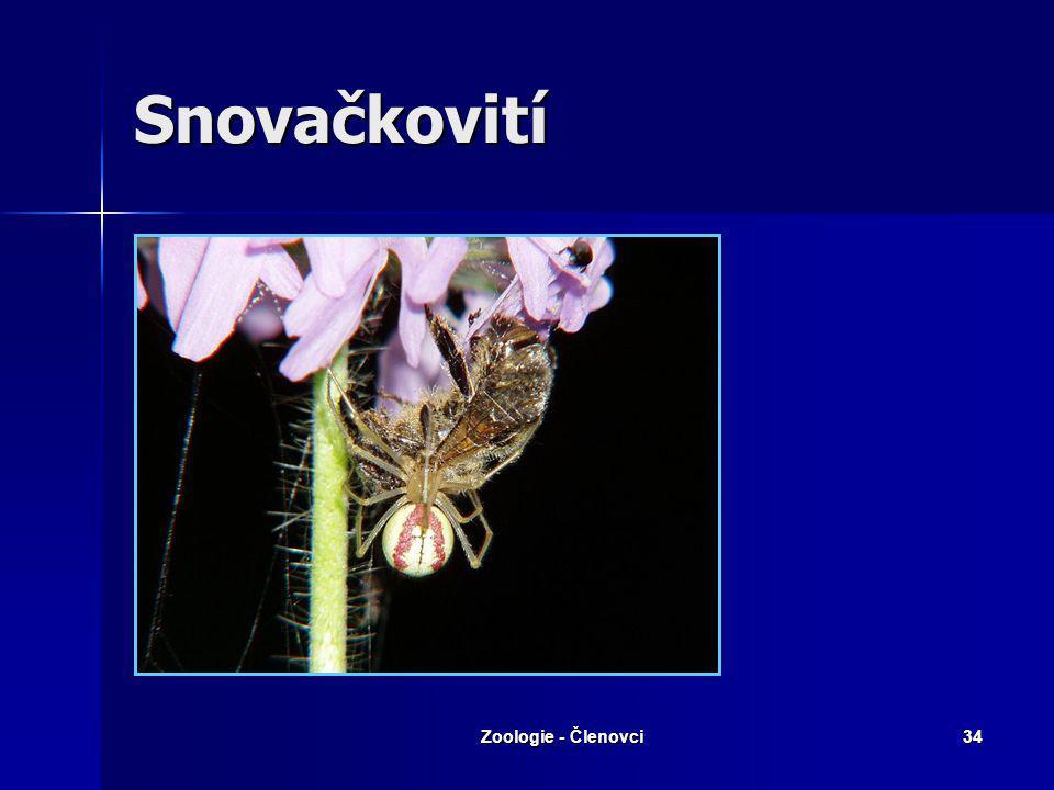 Zoologie - Členovci33 Běžníkovití – Běžník květomilný