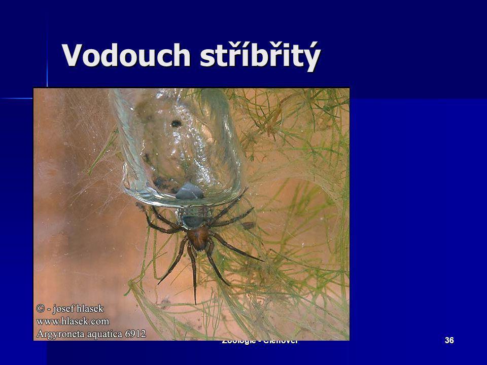 """Zoologie - Členovci35 S. jedovatá – """"Černá vdova"""""""
