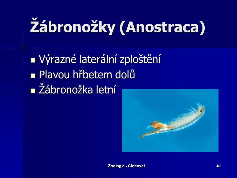 Zoologie - Členovci40 Taxonomie - Žabernatí Třída : Korýši Třída : Korýši Podtř. Žábronožky Podtř. Lupenonožci Podtř. Klanonožci Podtř. Kapřivci Podtř