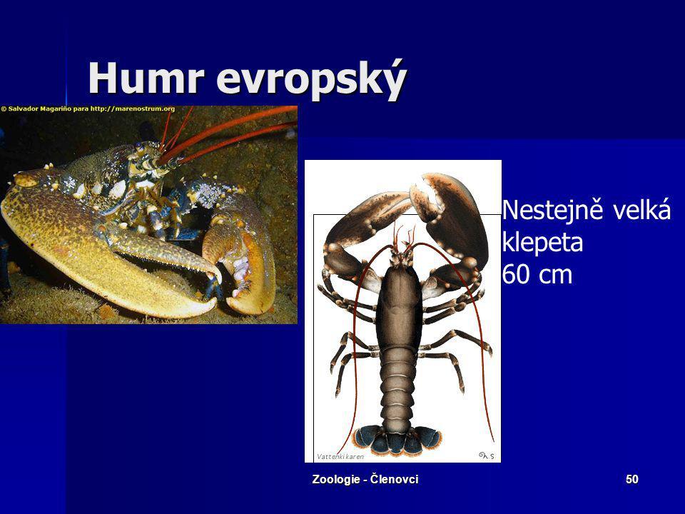 Zoologie - Členovci49 Rakovci (Malacostraca) Pevný krunýř Pevný krunýř Řád: Desetinožci (Decapoda) Řád: Desetinožci (Decapoda) tělní typy: rak X krab