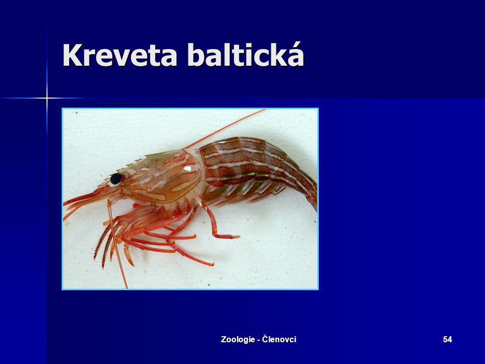 Zoologie - Členovci53 Humr evropský - zepředu