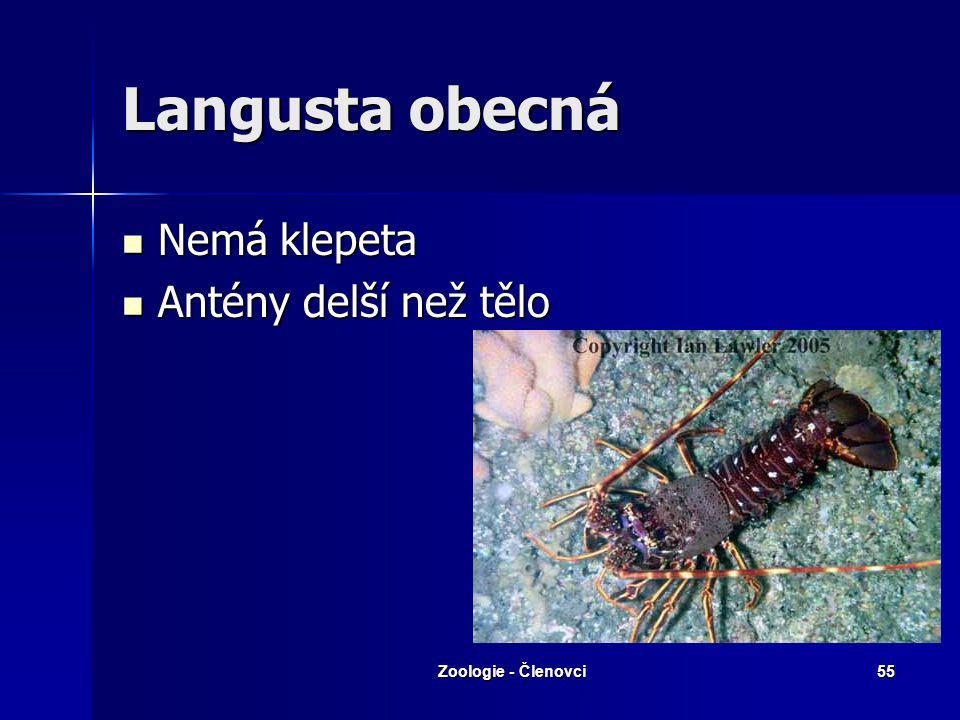 Zoologie - Členovci54 Kreveta baltická