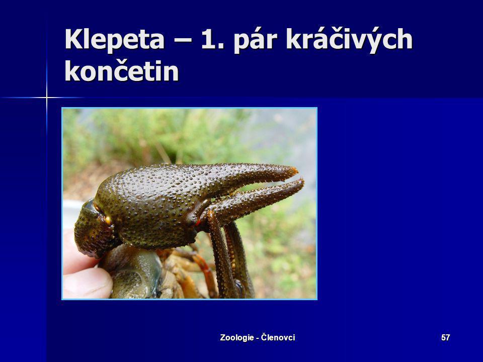 Zoologie - Členovci56 Rak říční