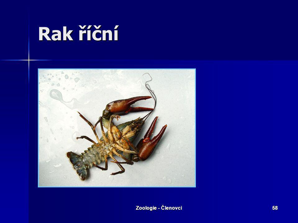 Zoologie - Členovci57 Klepeta – 1. pár kráčivých končetin