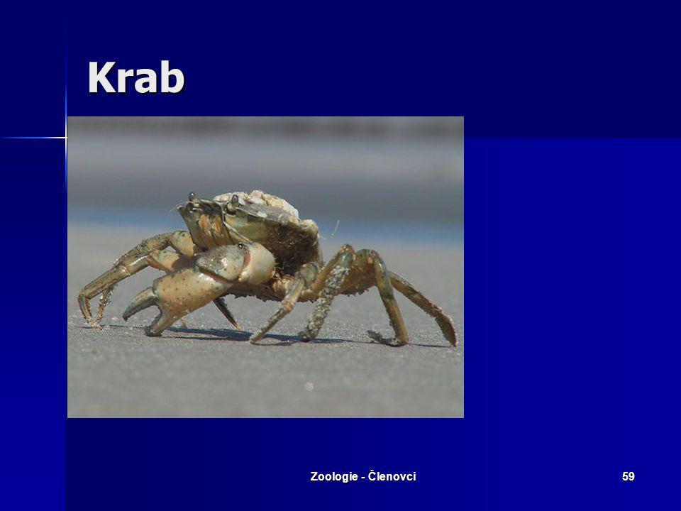 Zoologie - Členovci58 Rak říční