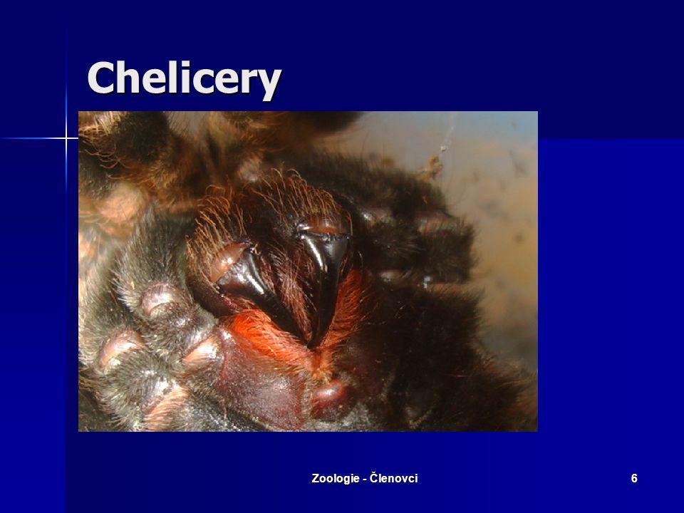 Zoologie - Členovci5 Podkmen: Klepítkatci Třída: Hrotnatci Třída: Hrotnatci Třída: Pavoukovci Třída: Pavoukovci –Řád: Štíři –Řád: Roztoči –Řád: Pavouc