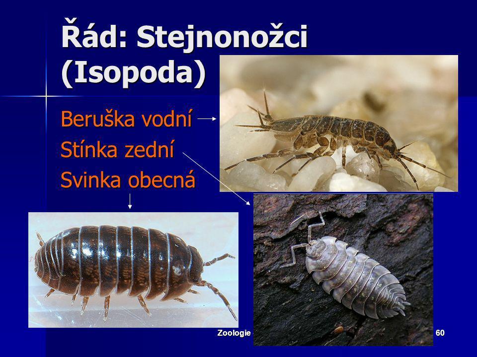 Zoologie - Členovci59 Krab