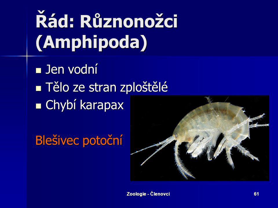 Zoologie - Členovci60 Řád: Stejnonožci (Isopoda) Beruška vodní Stínka zední Svinka obecná