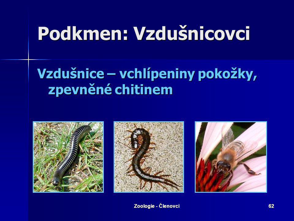 Zoologie - Členovci61 Řád: Různonožci (Amphipoda) Jen vodní Jen vodní Tělo ze stran zploštělé Tělo ze stran zploštělé Chybí karapax Chybí karapax Bleš
