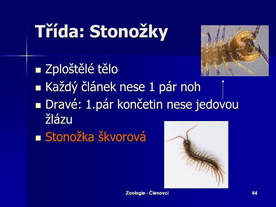 Zoologie - Členovci63 Systém Nadtřída: Stonožkovci Nadtřída: Stonožkovci Třída: stonožky Třída: mnohonožky Třída: drobnušky Nadtřída: Šestinozí Třída: