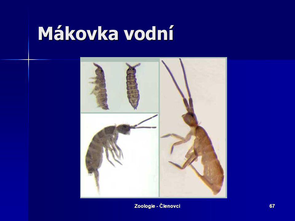 Zoologie - Členovci66 třída: Chvostoskoci Drobní, většinou součást půdního edafonu Drobní, většinou součást půdního edafonu Skákací aparát Skákací apa