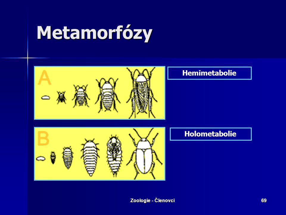 Zoologie - Členovci68 Třída: Hmyz Až 1 mil.druhů Až 1 mil.druhů RS: oplození vnitřní RS: oplození vnitřní častá partenogeneze častá partenogeneze Vývo