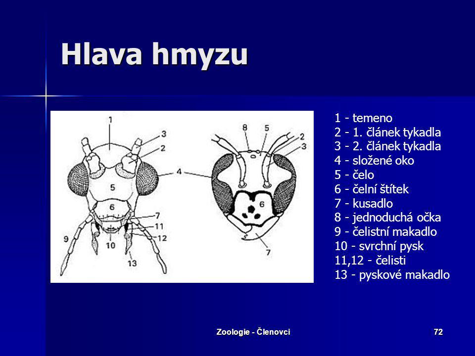 Zoologie - Členovci71 Stavba těla Hlava – fasetové oči (mozaikové Hlava – fasetové oči (mozaikové vidění) vidění) - tykadla: umístění smyslů - tykadla