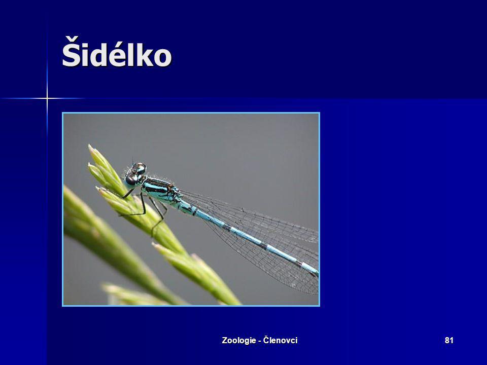 Zoologie - Členovci80 Vážka ploská