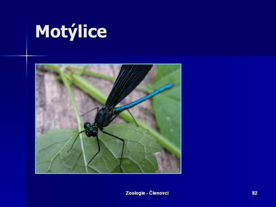 Zoologie - Členovci81 Šidélko