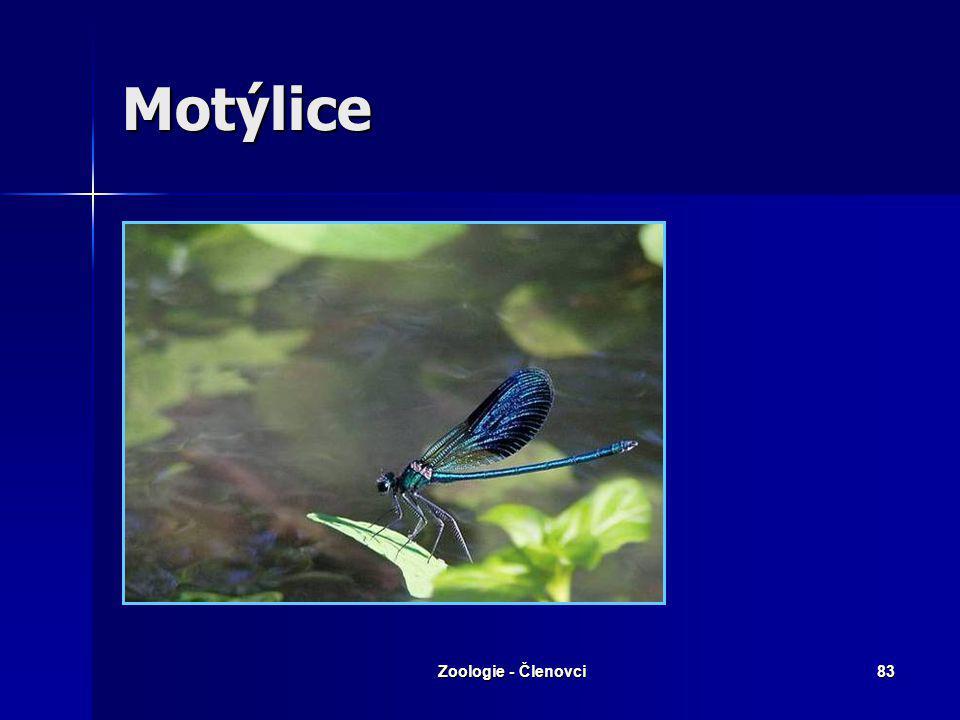 Zoologie - Členovci82 Motýlice