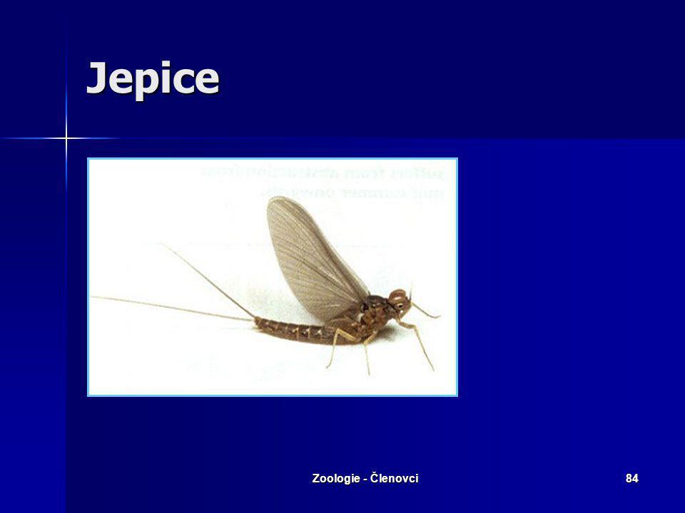 Zoologie - Členovci83 Motýlice