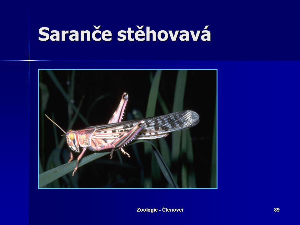 Zoologie - Členovci88 Saranče stěhovavá Zajímavosti: Vzhledem se liší i dospělci, stěhovavá fáze je pestřejší a větší. Při stěhování přeletují, řídí s