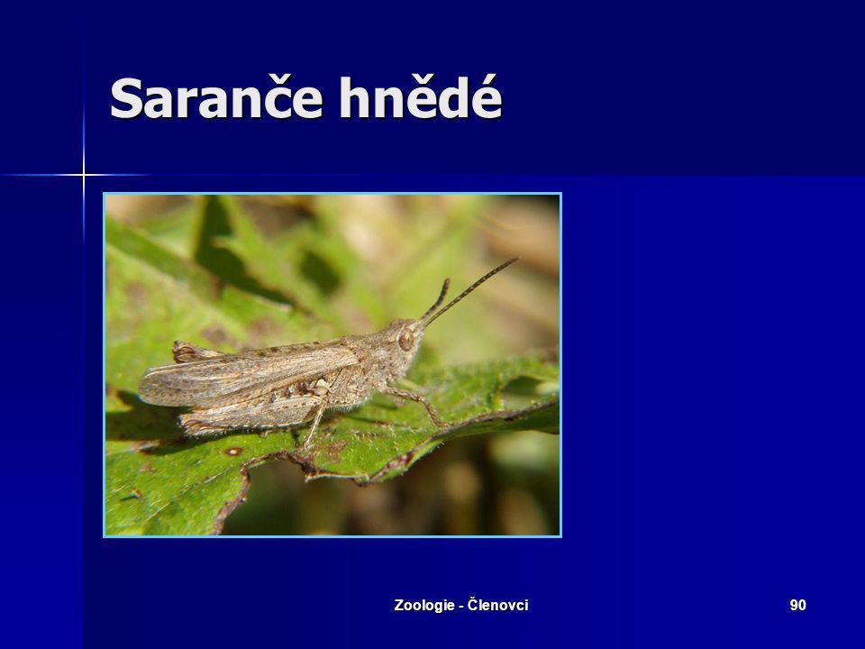 Zoologie - Členovci89 Saranče stěhovavá