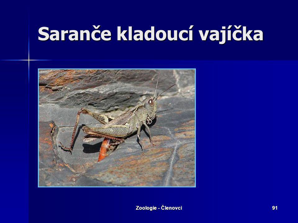 Zoologie - Členovci90 Saranče hnědé