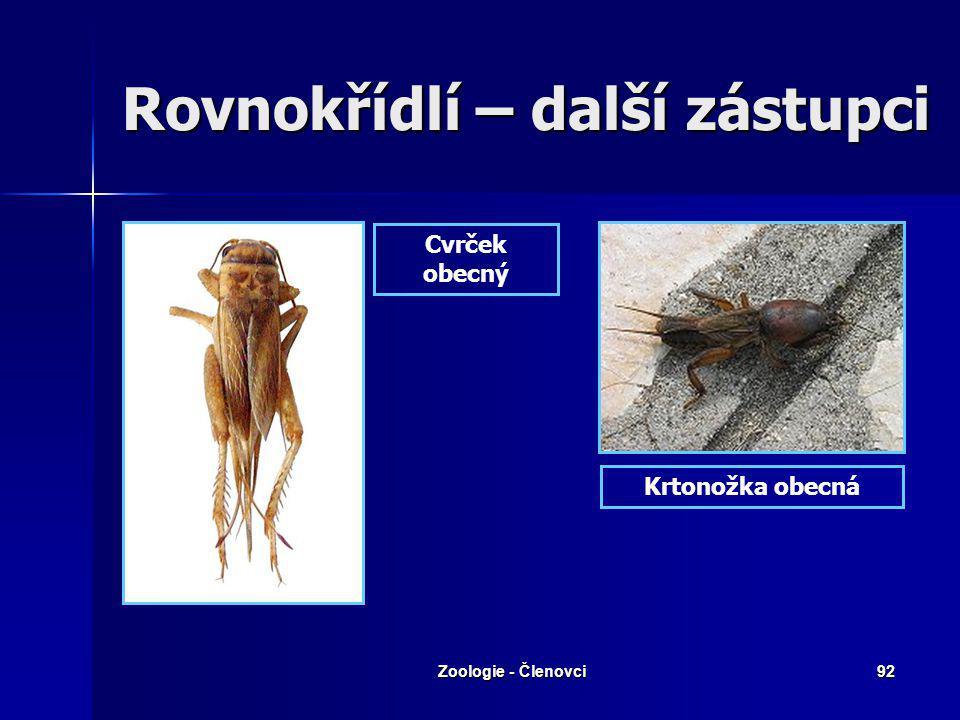 Zoologie - Členovci91 Saranče kladoucí vajíčka