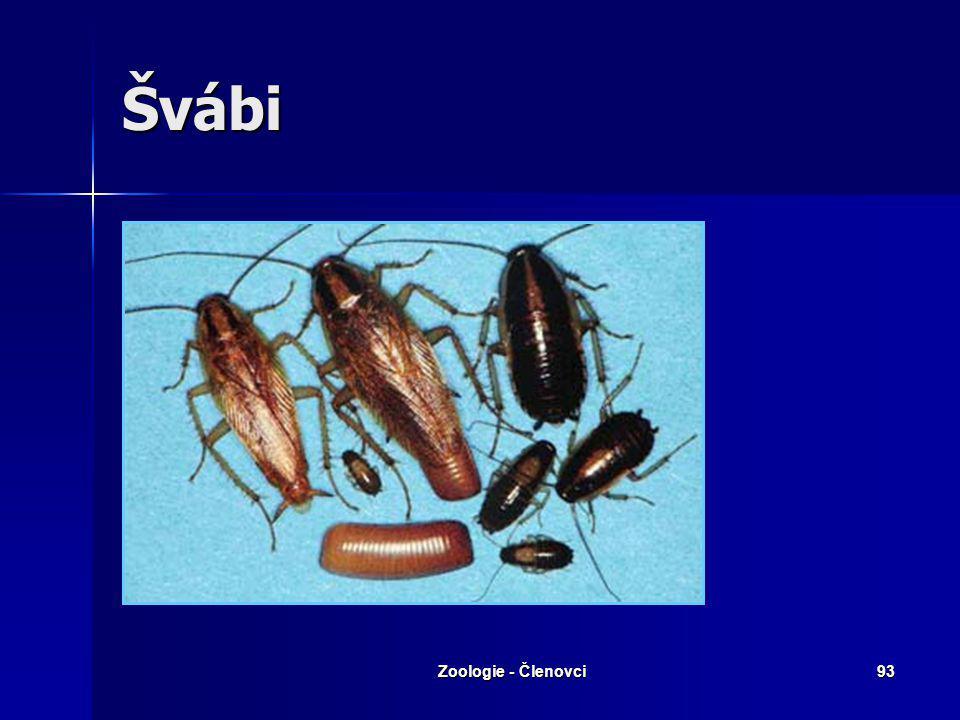 Zoologie - Členovci92 Rovnokřídlí – další zástupci Krtonožka obecná Cvrček obecný
