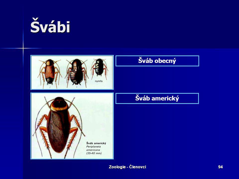 Zoologie - Členovci93 Švábi