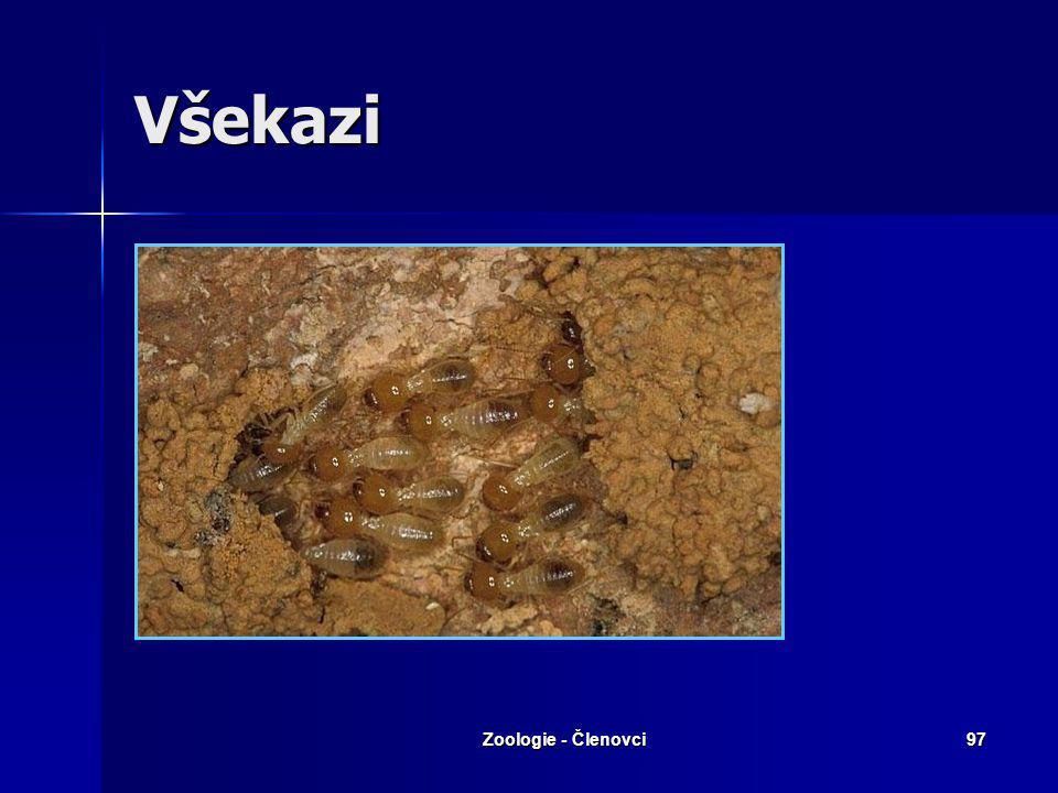 Zoologie - Členovci96 Škvoři Škvor velkýŠkvor obecný