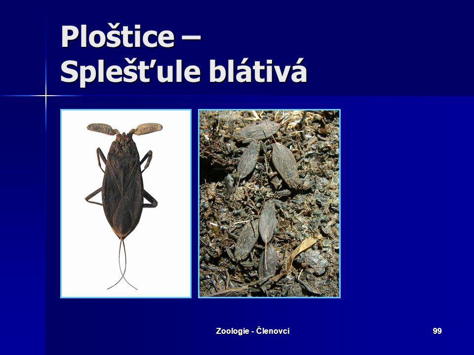 Zoologie - Členovci98 Všekazi