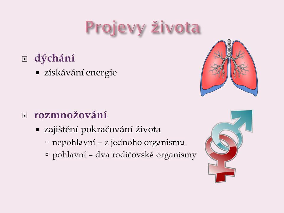  dýchání  získávání energie  rozmnožování  zajištění pokračování života  nepohlavní – z jednoho organismu  pohlavní – dva rodičovské organismy
