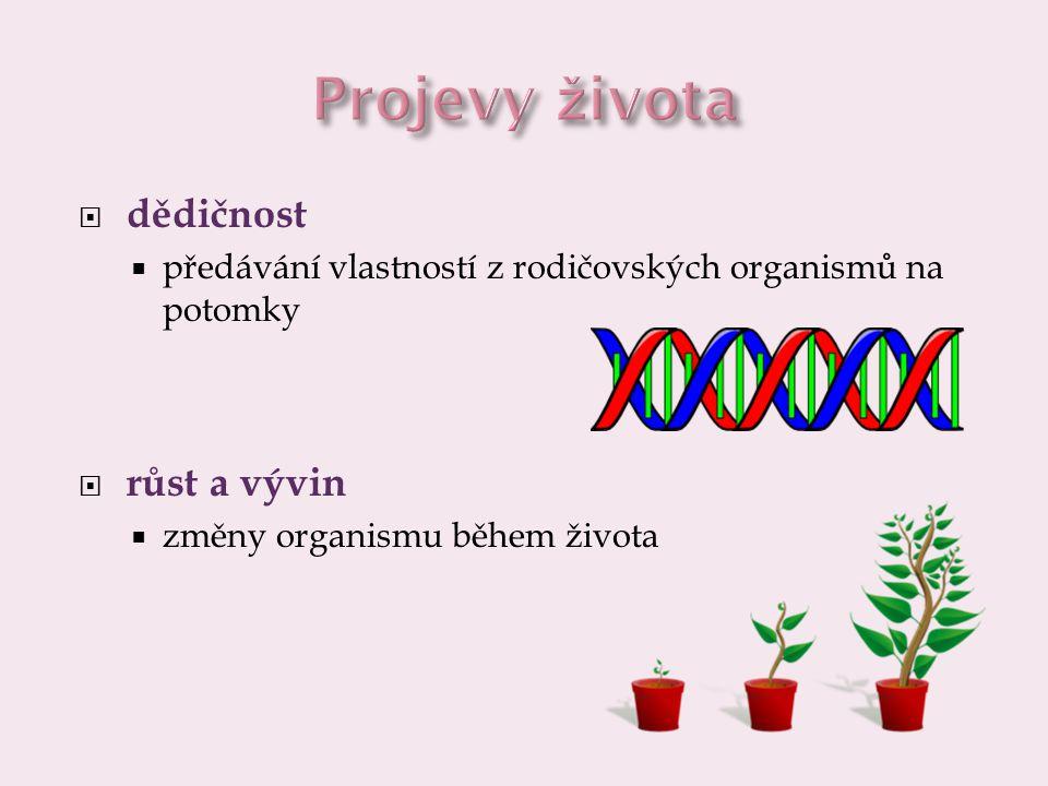  dráždivost  reakce na podněty z okolí  pohyb  přesun z místa na místo  pohyby částí organismu na místě