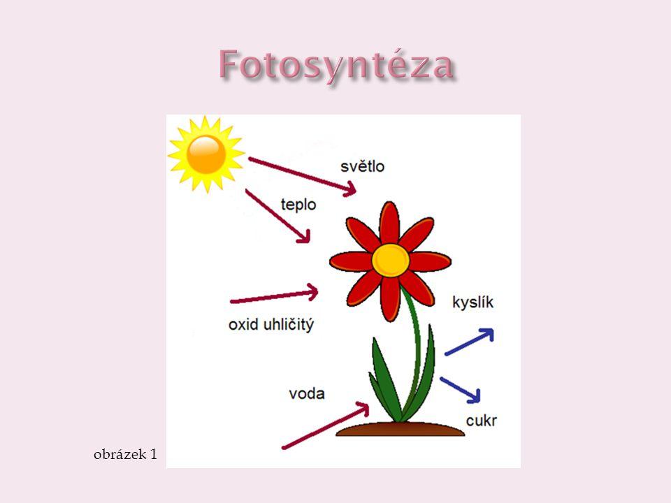  opačným procesem je dýchání  díky kyslíku dochází k rozkladu organických látek, uvolňuje se energie a vzniká oxid uhličitý  rostliny dýchají pomocí průduchů, dýchají ve dne i v noci, fotosyntetizují jen ve dne obrázek 2