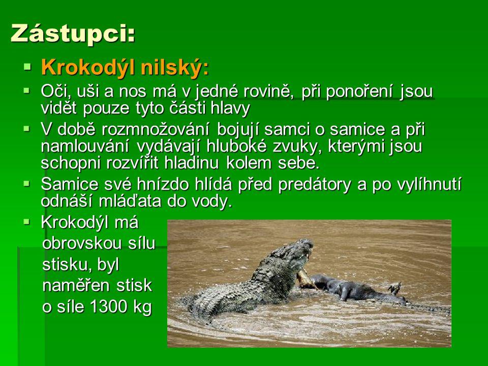 Zástupci:  Krokodýl nilský:  Oči, uši a nos má v jedné rovině, při ponoření jsou vidět pouze tyto části hlavy  V době rozmnožování bojují samci o s
