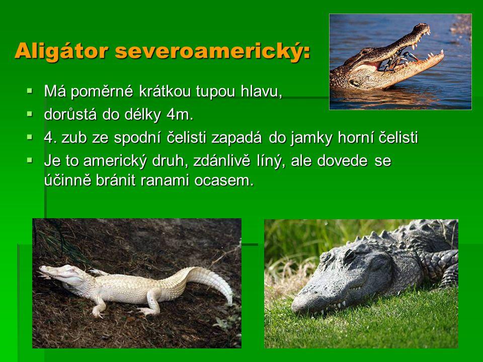 Aligátor severoamerický:  Má poměrné krátkou tupou hlavu,  dorůstá do délky 4m.  4. zub ze spodní čelisti zapadá do jamky horní čelisti  Je to ame