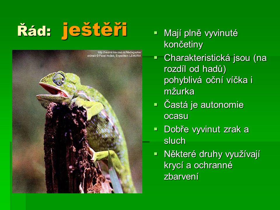 Řád: ještěři  Mají plně vyvinuté končetiny  Charakteristická jsou (na rozdíl od hadů) pohyblivá oční víčka i mžurka  Častá je autonomie ocasu  Dob