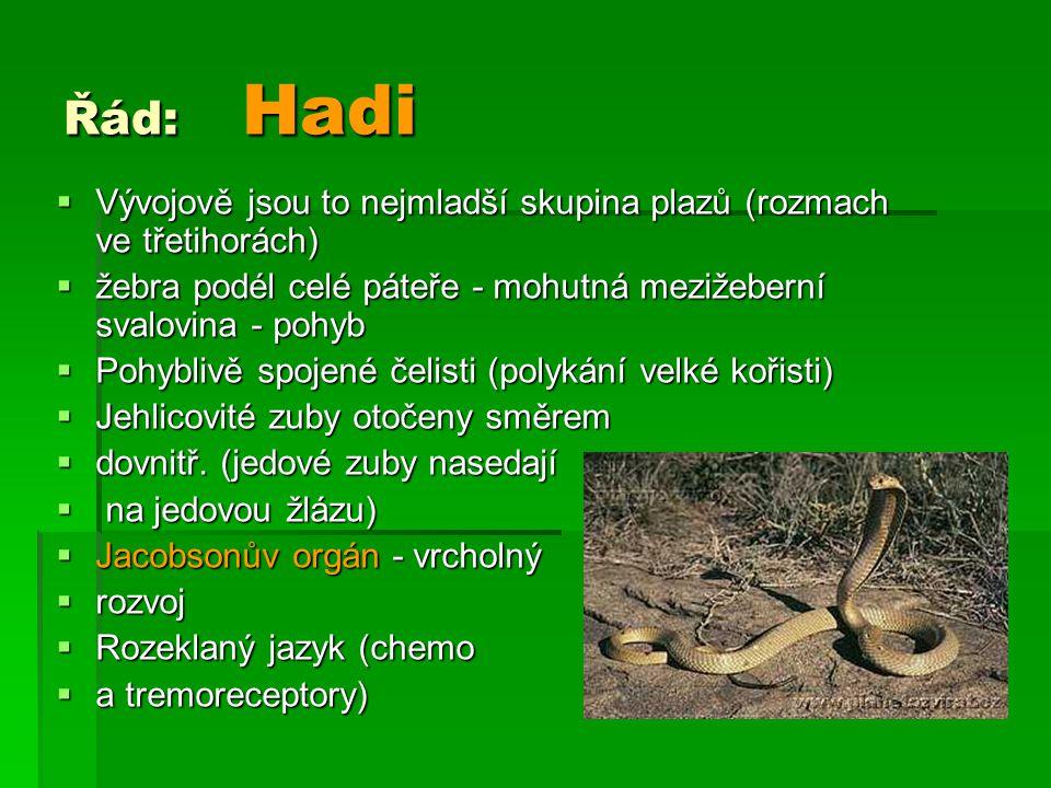 Řád: Hadi  Vývojově jsou to nejmladší skupina plazů (rozmach ve třetihorách)  žebra podél celé páteře - mohutná mezižeberní svalovina - pohyb  Pohy